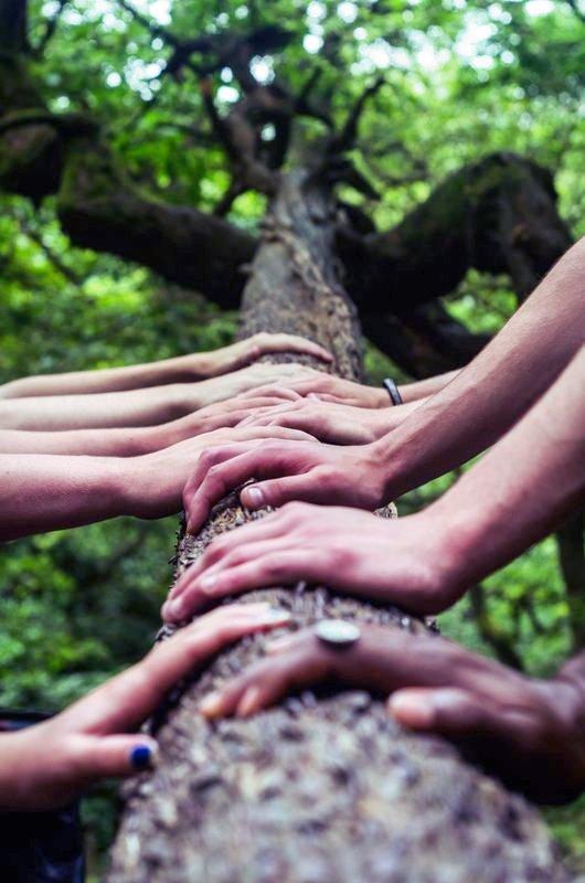 des mains se suivent le long d'un tronc, prêtes pour une aventure